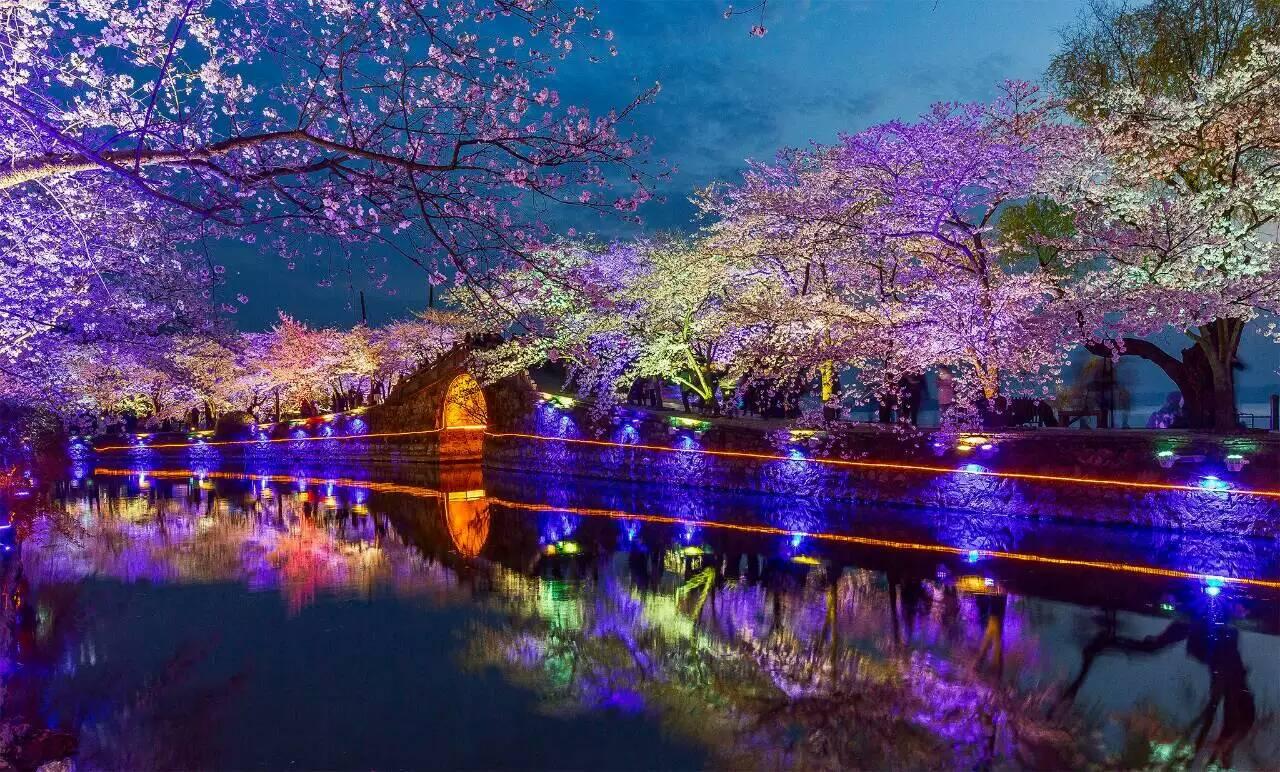 太湖鼋头渚樱花夜景1.jpg