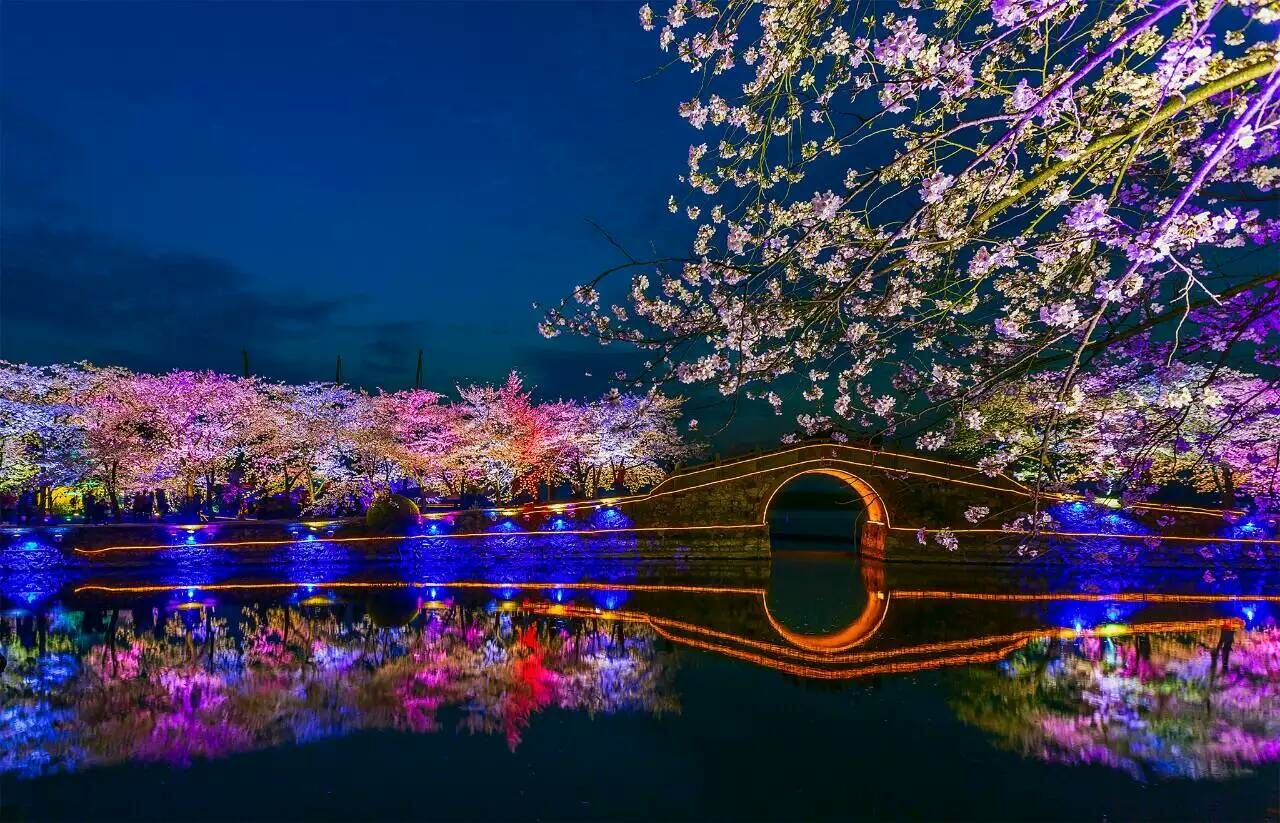 太湖鼋头渚樱花夜景3.jpg