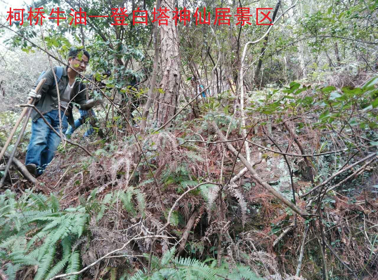 神仙居景区2.jpg