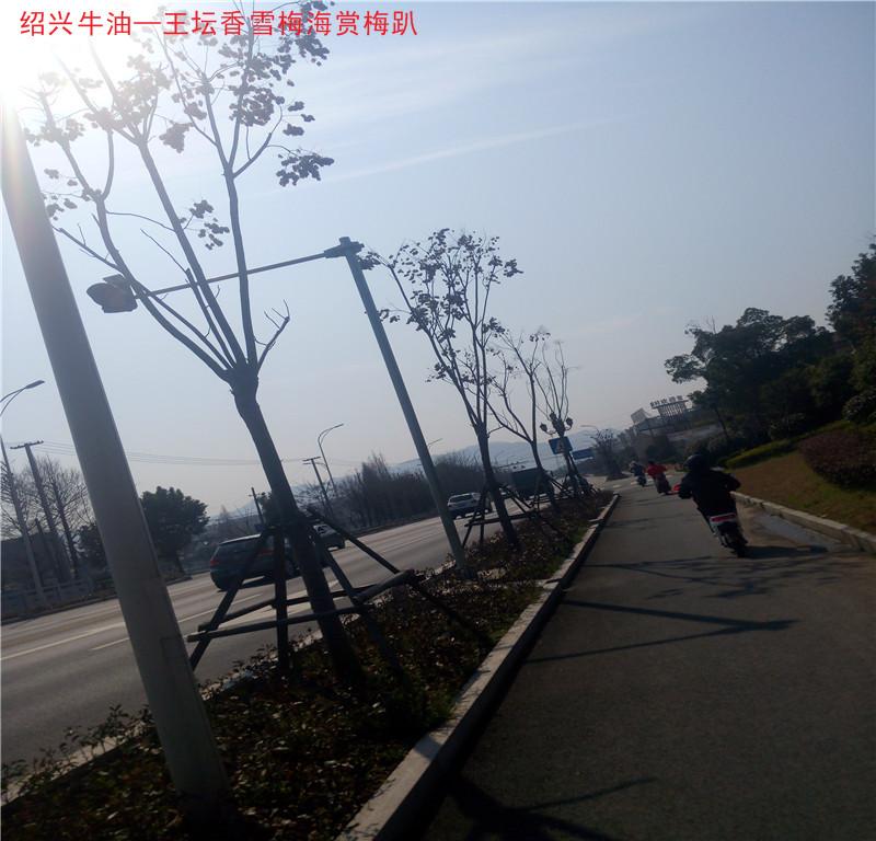 阳明路15.jpg