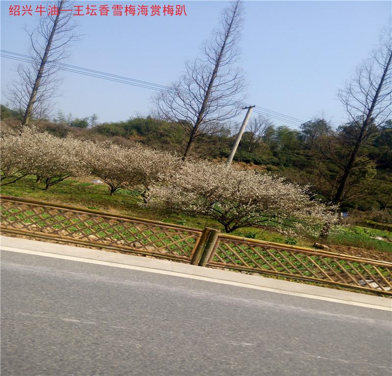 王石路2.jpg