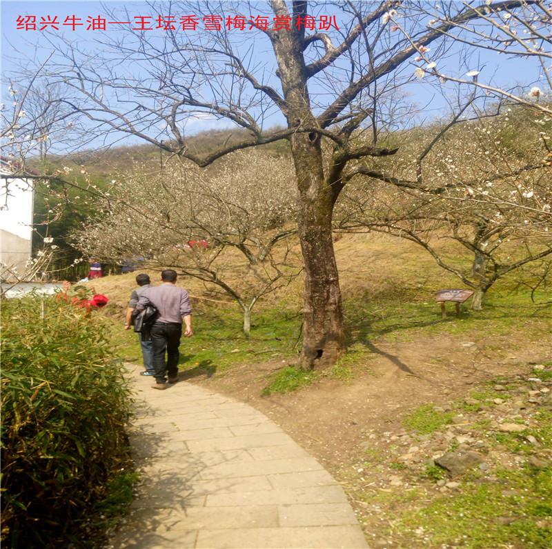 香雪梅海景区1.jpg