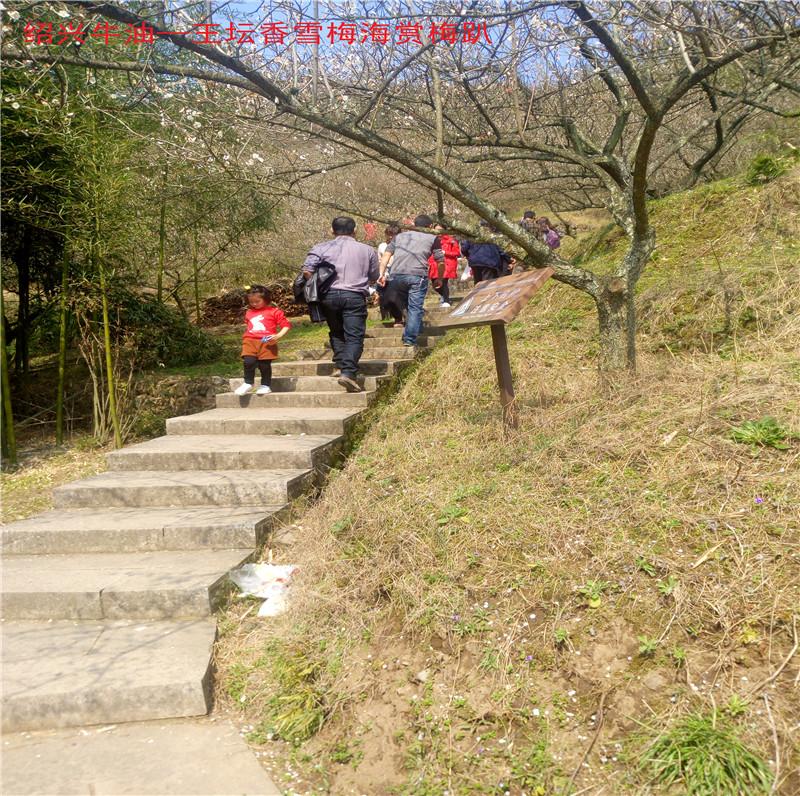 香雪梅海景区2.jpg