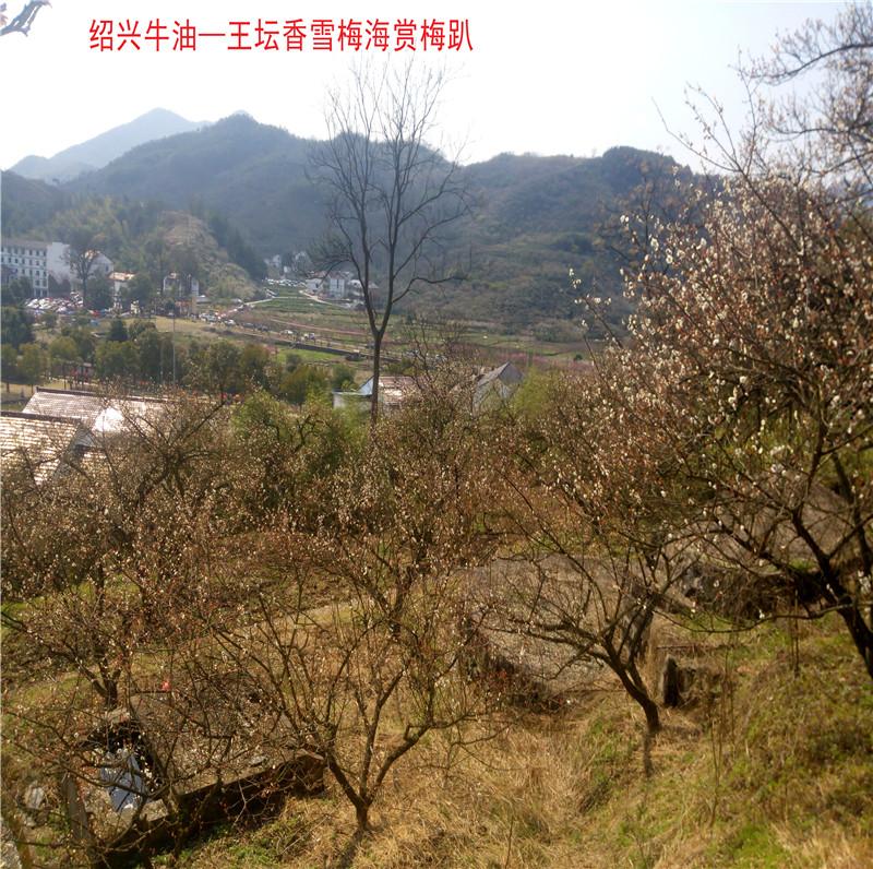 香雪梅海景区5.jpg