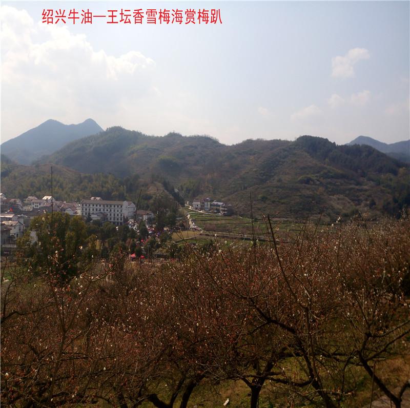 香雪梅海景区10.jpg
