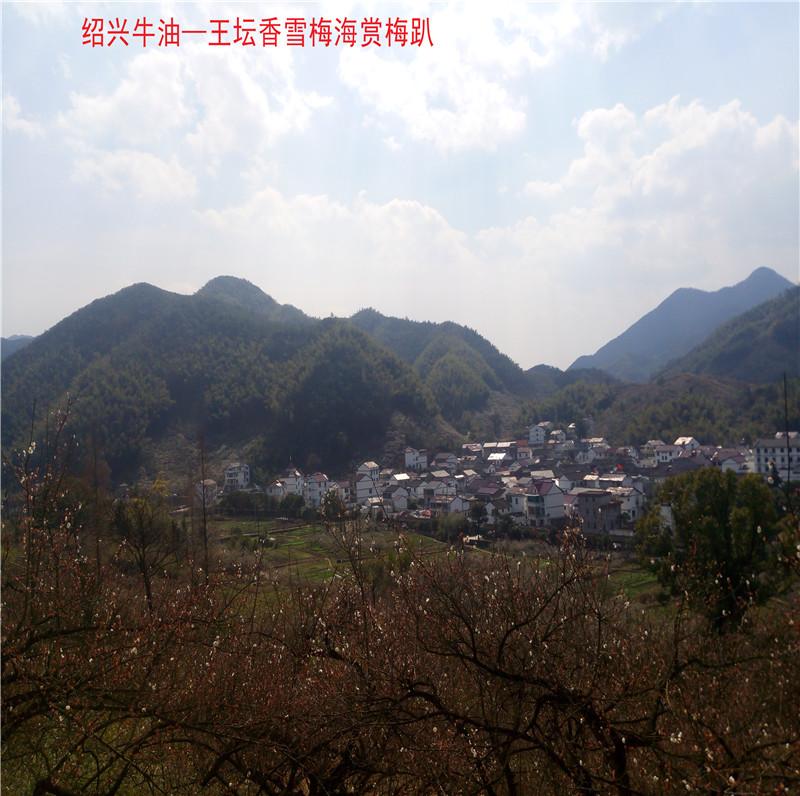 香雪梅海景区11.jpg