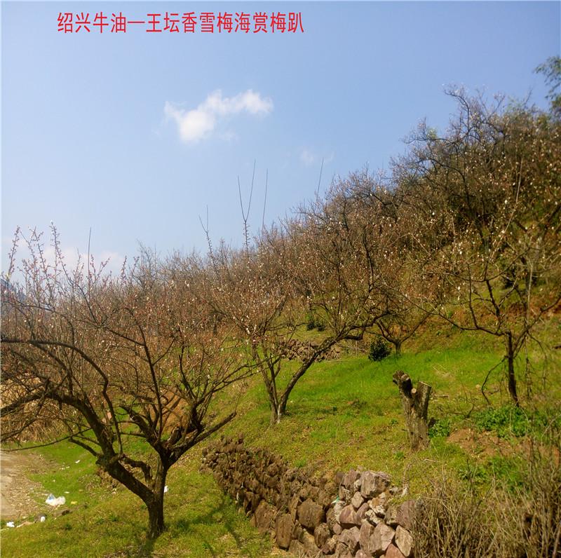 香雪梅海景区13.jpg