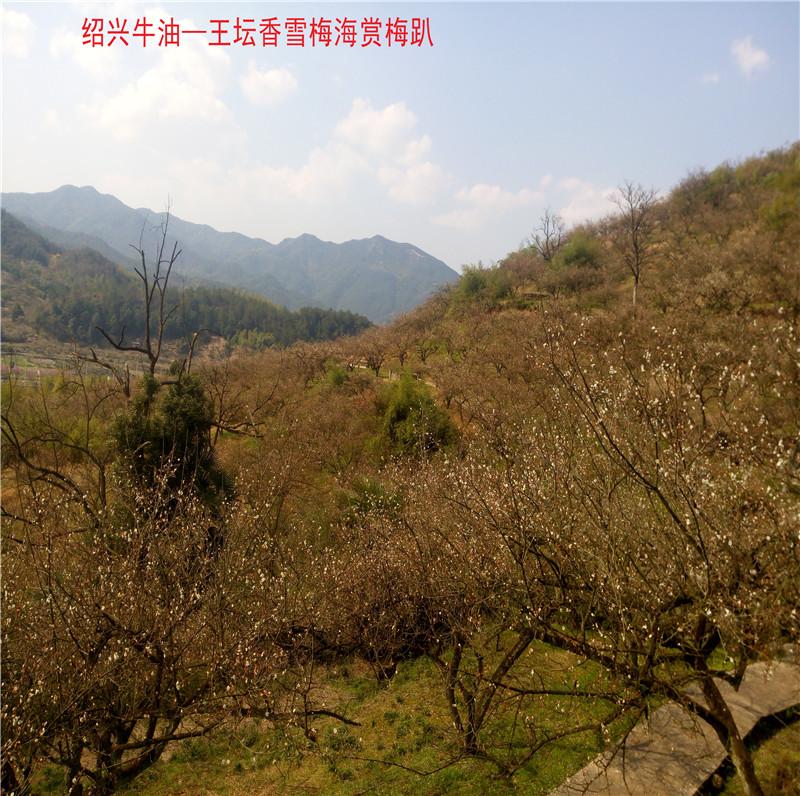 香雪梅海景区16.jpg
