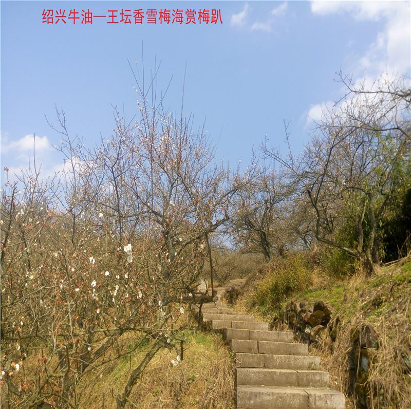香雪梅海景区18.jpg