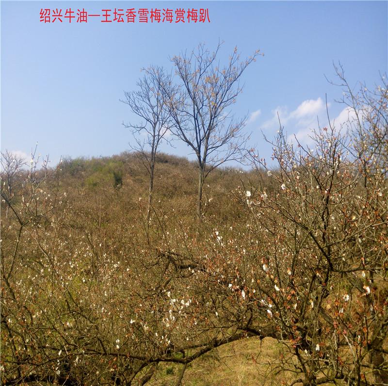 香雪梅海景区19.jpg