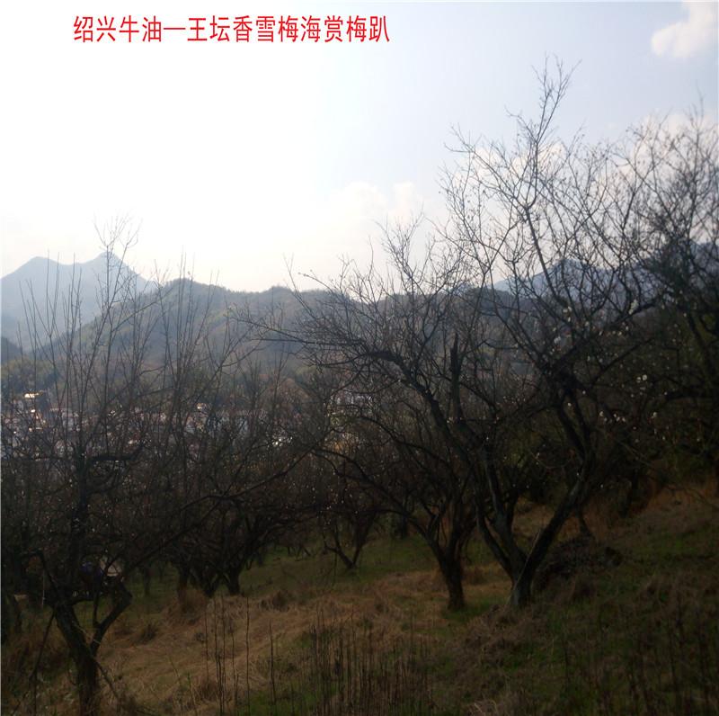 香雪梅海景区21.jpg