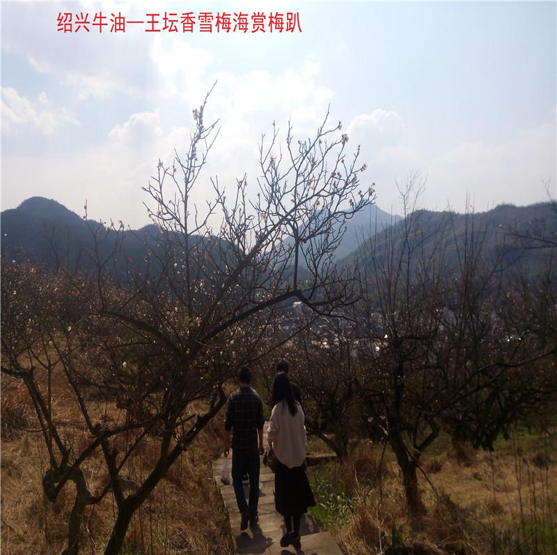 香雪梅海景区22.jpg