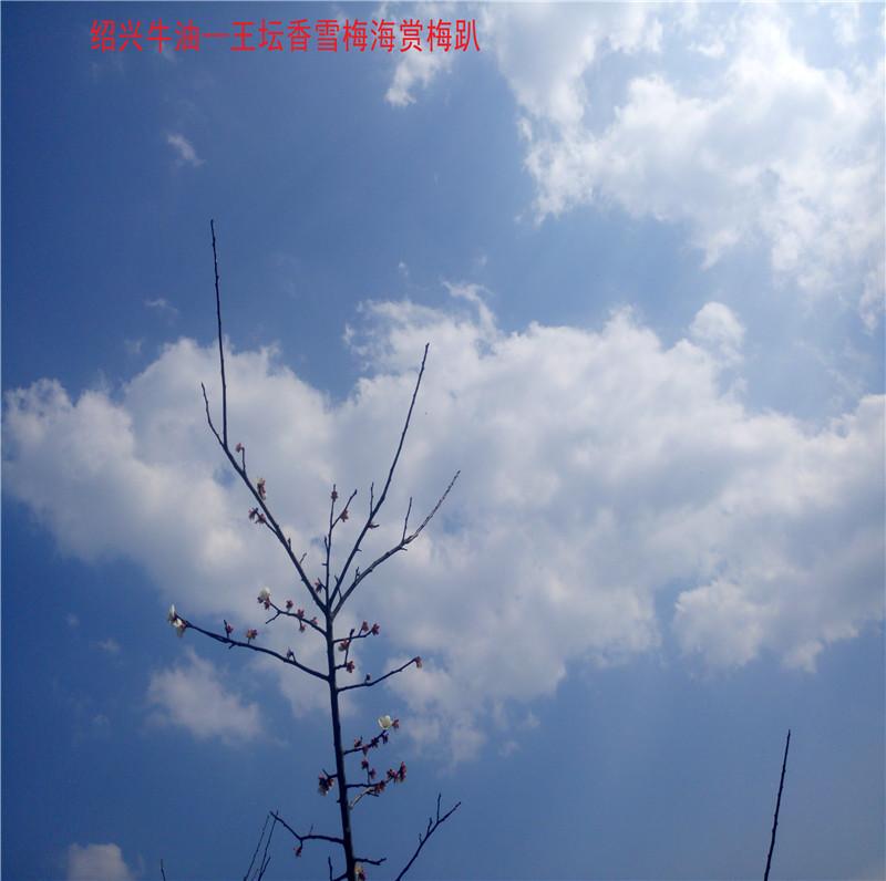 香雪梅海景区26.jpg