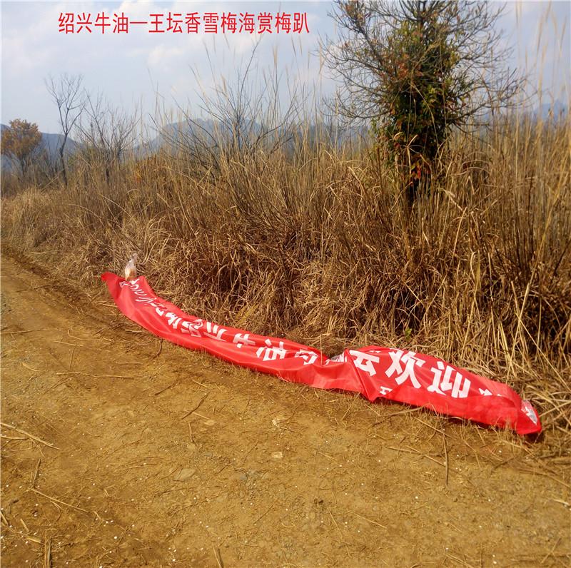 香雪梅海景区28.jpg