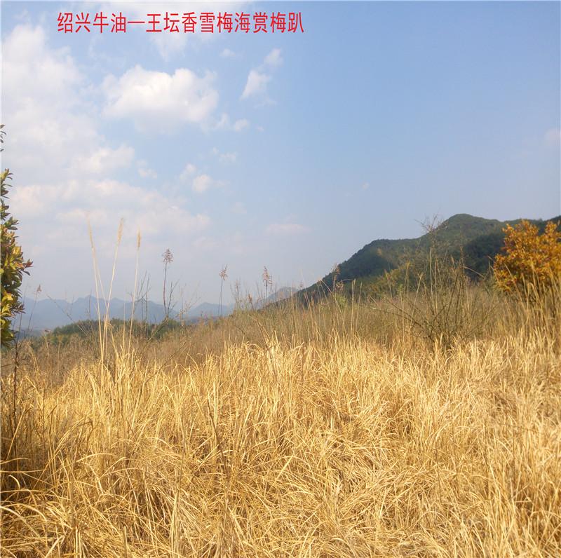 香雪梅海景区31.jpg