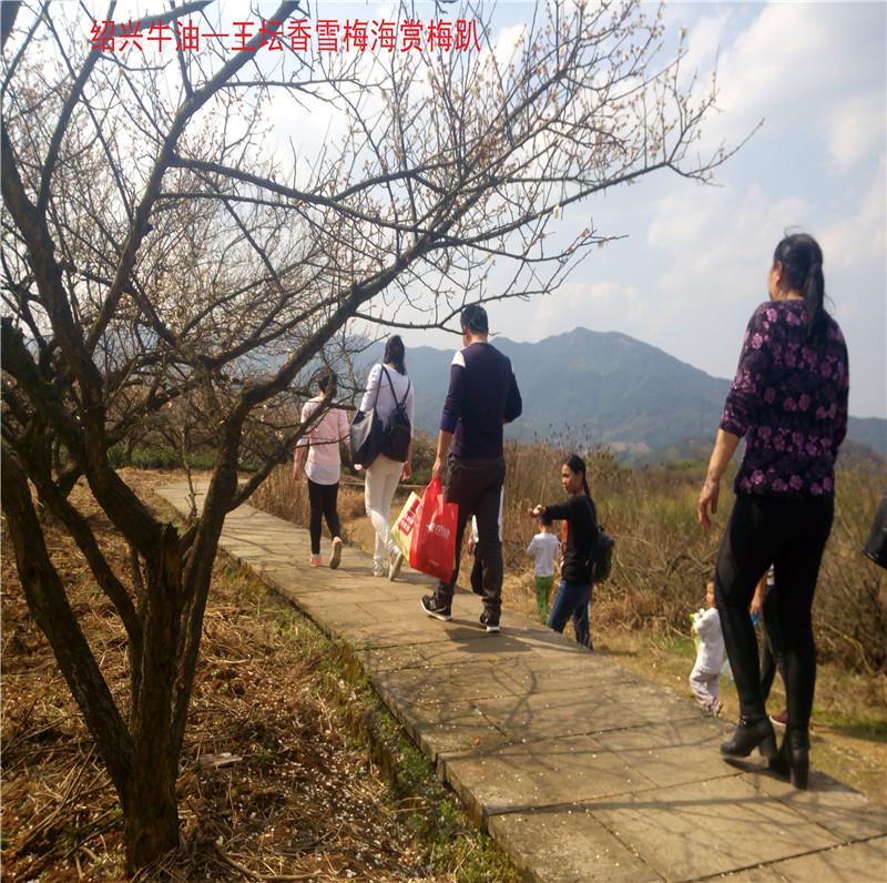 香雪梅海景区39.jpg