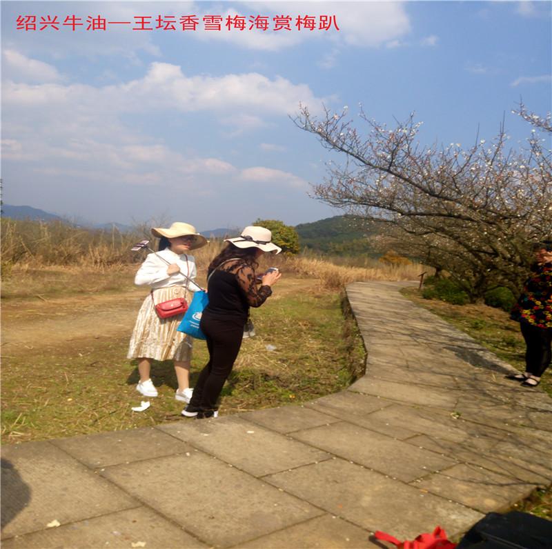 香雪梅海景区40.jpg