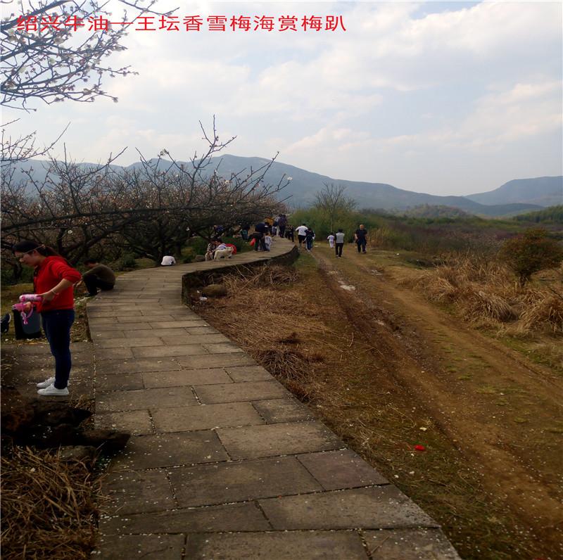 香雪梅海景区41.jpg