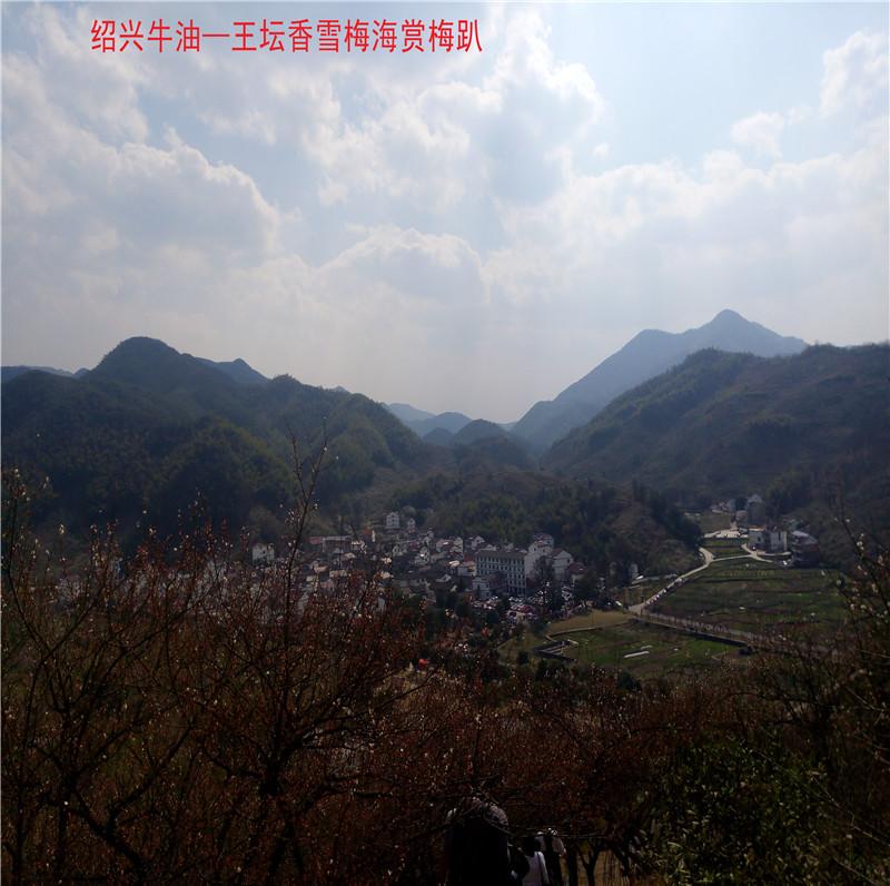香雪梅海景区50.jpg