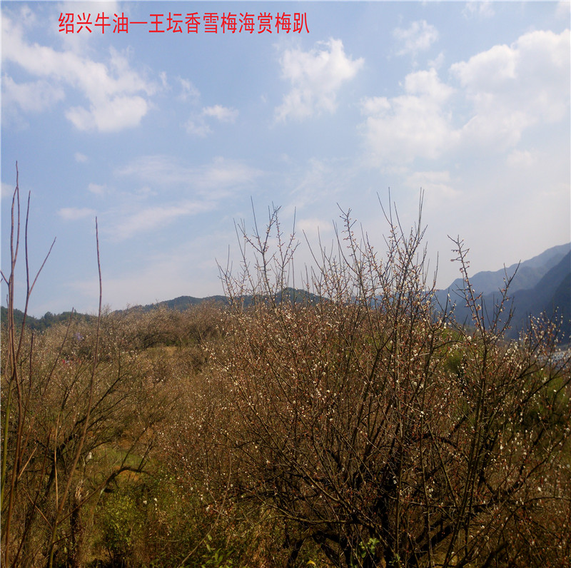 香雪梅海景区51.jpg