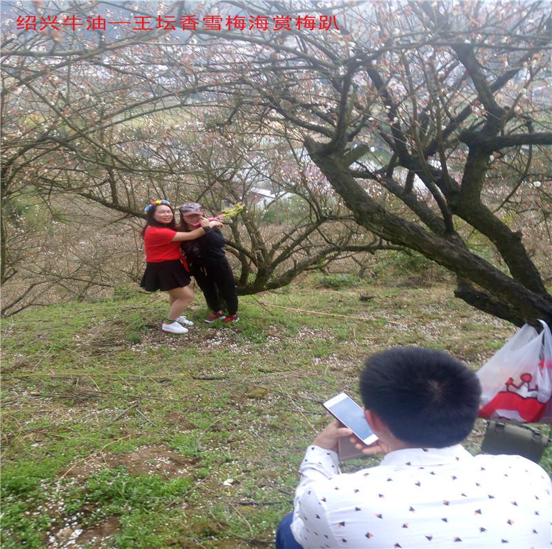 香雪梅海景区53.jpg