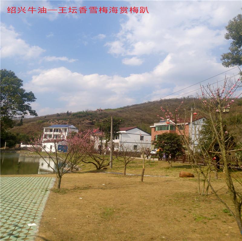 香雪梅海景区70.jpg