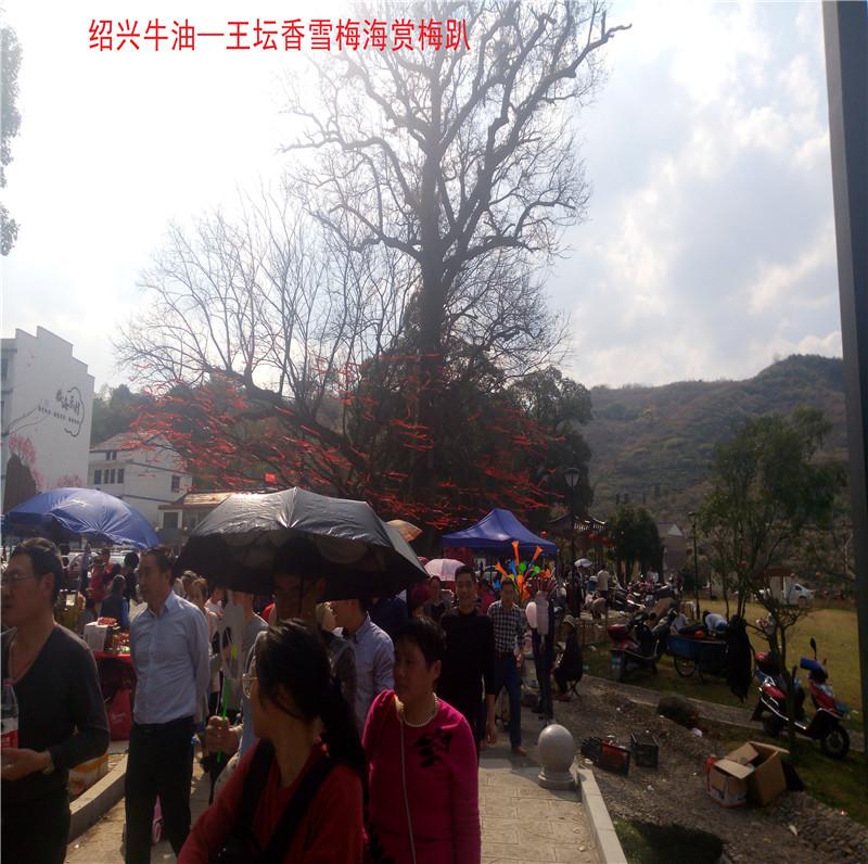 香雪梅海景区93.jpg